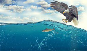 white-tailed-eagle-2015098_640